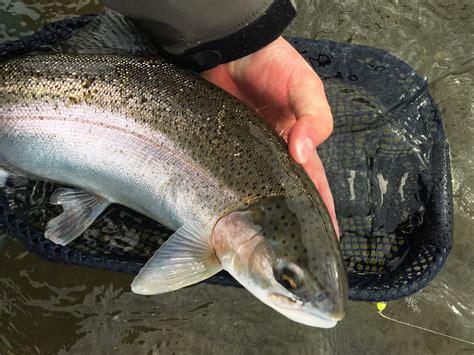 Bid Fish Big Fish Tenkara Fly