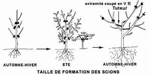 Quand Planter Un Pommier : taille des arbres fruitiers pommier poirier cerisier ~ Dallasstarsshop.com Idées de Décoration