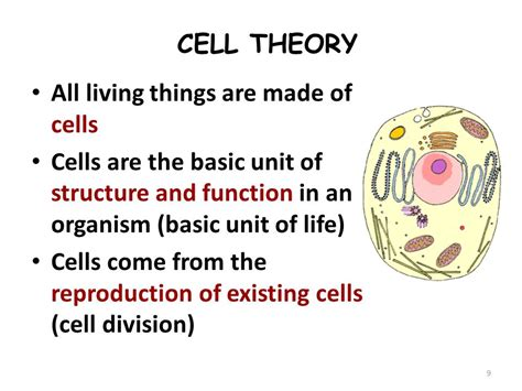basic structure of a cell ppt