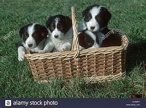 White Puppies In A Basket | www.pixshark.com - Images ...
