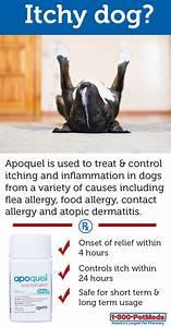 managing pet skin allergies