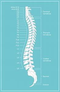Neck Vertebrae Chart Aans Spinal Cord Injury