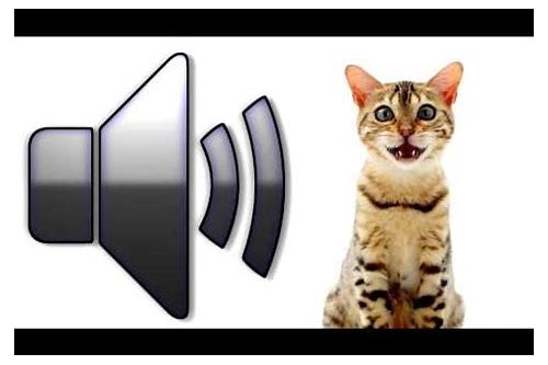 voice of cat mp3 download