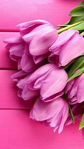 Wallpaper Tulip, 4k, HD wallpaper, spring, flower, pink ...