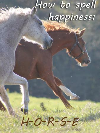 horse quotes  sayings  equine enthusiasts