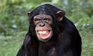 Humans Are More Than Clever Apes  Don U0026 39 T Make Me Laugh
