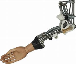 Robotic Arm Inspired By Elephants -- ScienceDaily