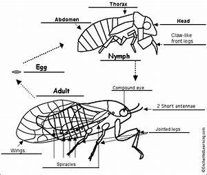 Fungi Fun Guys   Cicada