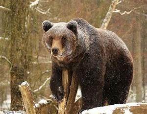 Halten Maulwürfe Winterschlaf : die besten 17 ideen zu welche tiere halten winterschlaf ~ Lizthompson.info Haus und Dekorationen