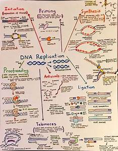 Flowchart  Drawings And Dna On Pinterest