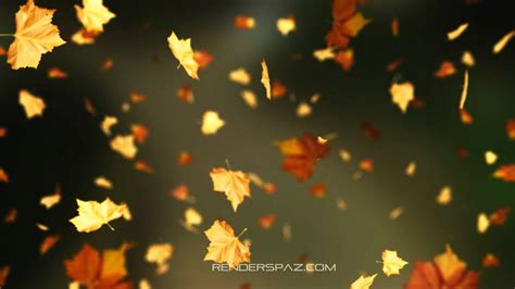 Autumn Tree Leaf Fall Animated Wallpaper - fall leaves animated wallpaper