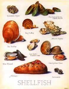 SHELLFISH Types