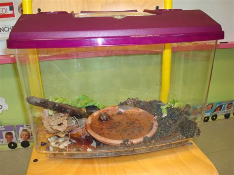 comment se debarrasser des escargots dans un aquarium 28 images un aquarium quot low tech