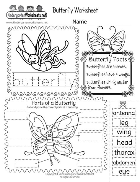 parts   butterfly worksheet  kids cut  paste