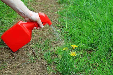 natural weed killers  ultimate guide alpha environmental