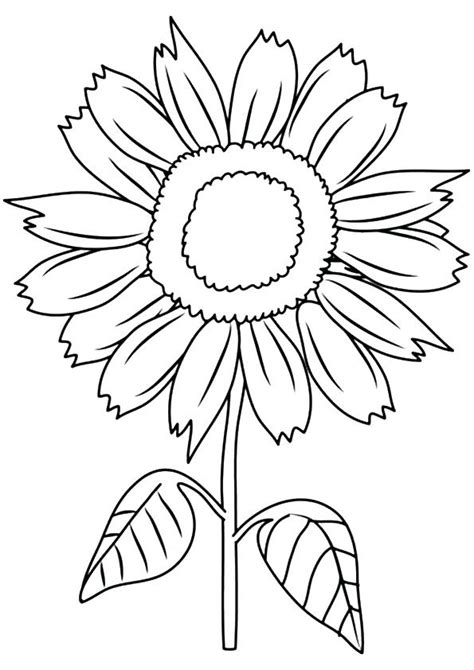Sunflower Drawing For Kids At Free For