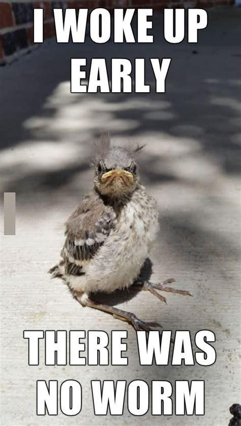Funny Bird Memes - funny bird meme www pixshark com images galleries with a bite