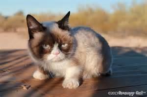 grumpy cat grumpy cat grumpy cat picture