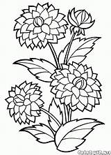 Coloring Peonies Colorkid Salvo Desenhos sketch template