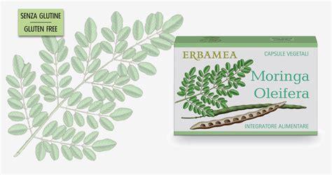erbamea moringa oleifera