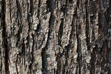 trees texture tree texture background trees texture