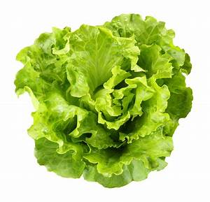 Lettuce picture cartoon pictures and cliparts - Clipartix