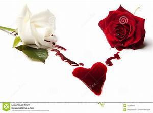Roses Bleeding A Heart Stock Photo - Image: 12356400