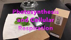 Photosynthesis And Cellular Respiration Lab  Labquest