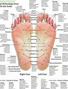 10 Pack Essential Oil Reflexology Chart Oil Use Guide 85