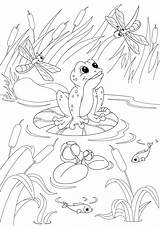 Pond Coloring Fish Drawing Pages Ecosystem Poker Getdrawings Getcolorings Printable Colorings sketch template