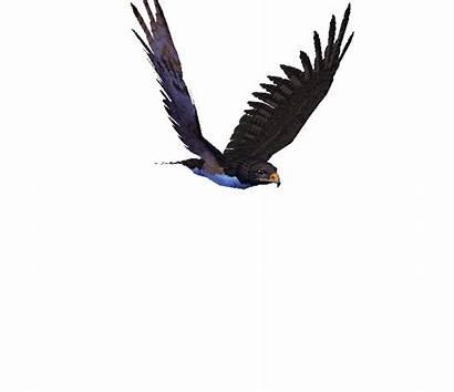 Animated Birds Eagle Animation Eagles Flying Bird