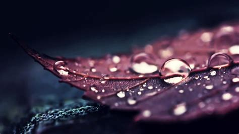 closeup view of brown leaf with water drops 4k hd brown