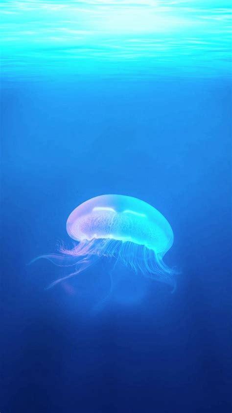 ocean jellyfish surreal light iphone  wallpaper