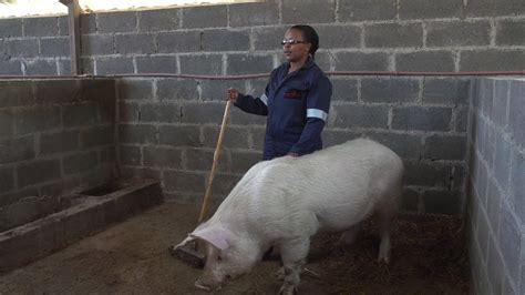 meet constance math teacher  pig farmer  lesotho