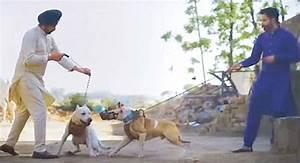 Diljit Dosanjh And Kamal Grewa 39glorifying39 Dog Fighting
