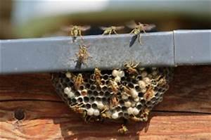 Fliegen Im Rolladenkasten : wespennest entfernen kosten bewertet de ~ Lizthompson.info Haus und Dekorationen