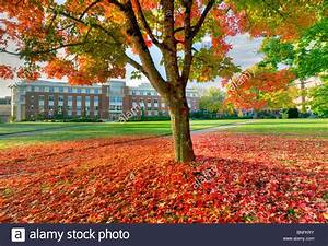 The valley Library and quad with fall color. Oregon State ...