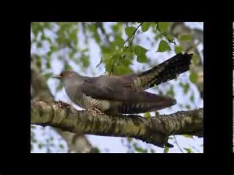 Пробуждение ВЕСНЫ Пение птиц в весеннем лесу Дождь Youtube
