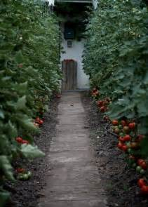 Beautiful Tomato Garden