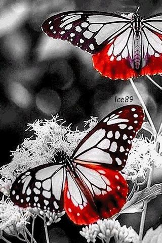 320x480 Animated Wallpapers - animated 320x480 171 neon butterflies 187 cell phone