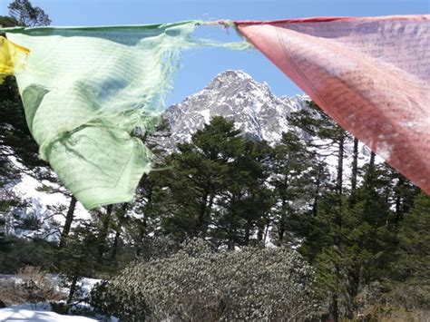 yumthang valley north sikkim  march  photo