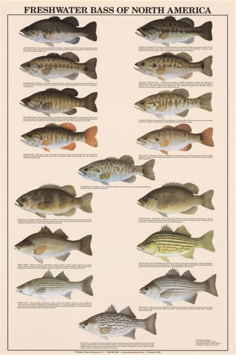 bass fish freshwater chart fishing tips