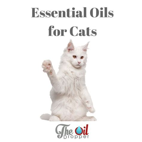 cats essential oils can you use essential oils with cats trees cats and the o jays