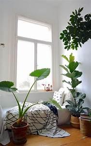 Zimmerpflanzen Für Schlafzimmer : urban jungle pflanzen f r innen schlafzimmer pflanzen ~ A.2002-acura-tl-radio.info Haus und Dekorationen