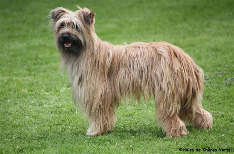 le berger oil near me besoin d 39 aide education et comportement canin chiens
