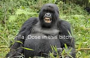 What would happen if we gave a Silverback steroids? Srs ...