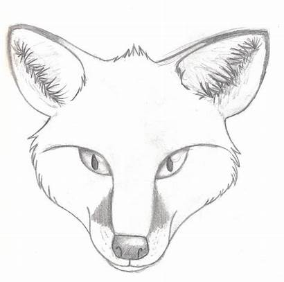 Fox Realistic Head Draw Coloring Drawing Drawings