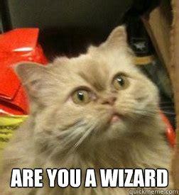 Are You A Wizard Meme - wizard cat memes quickmeme
