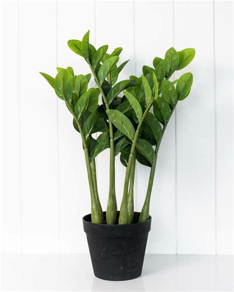 Artificial Plant - Zanzibar Gem (MIN 2) - 51cm