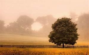 Landscape, Nature, Fence, Trees, Mist, Sunrise, Morning, Sunlight, Field, Grass, Shrubs, New